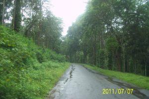 roads in the rain
